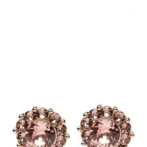 LILY AND ROSE Miss Sofia Earrings Rose Peach / Blush Rose korvakorut