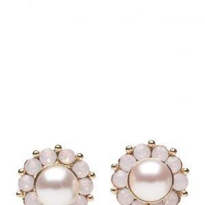 LILY AND ROSE Miss Sofia Pearl Earrings Rosaline korvakorut